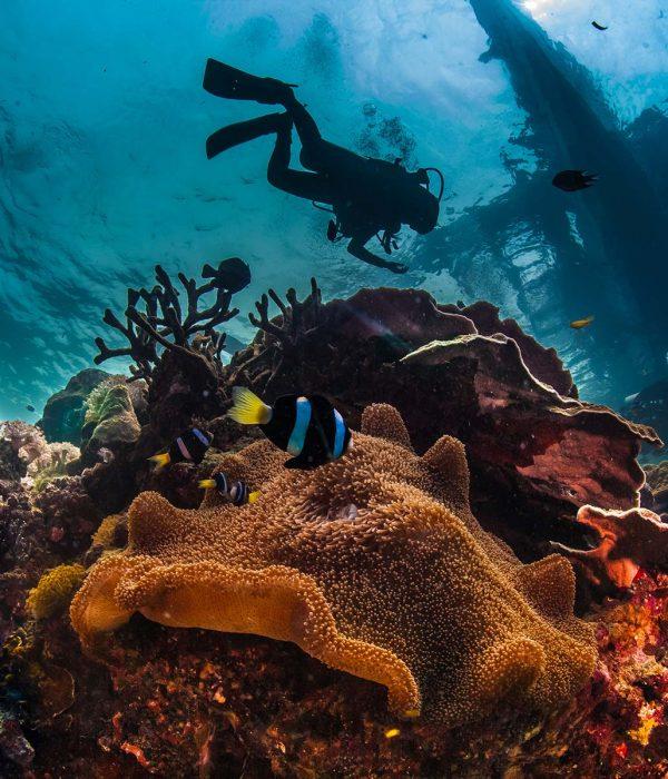 underwater-reefscape-small.jpg
